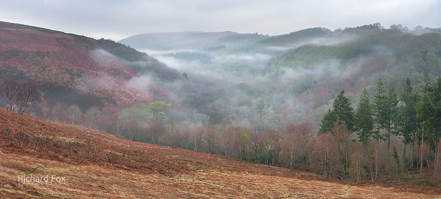Bovey Valley Mists