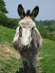 Noddy the Donkey