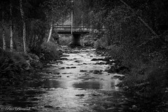 Late summer creek