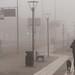 Morning fog, jog and dog