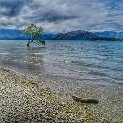 The Lone Tree of Lake Wanaka