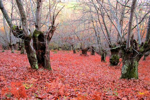 Outono - de Ignacio de Juan
