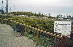 24-0886 11 - BTCV Wildflower Meadow edited-4