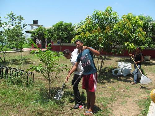 algodonal arborización
