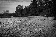 Swedish east coast shore