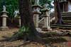 Photo:「The Roots Of Trees」猪名野神社 - 兵庫 By