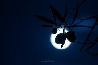 Contraluz aceitunas en la noche