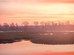 Dawn at 40 Acre Lake