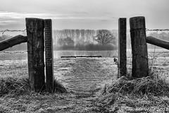 Cold misty morning (1 van 1)
