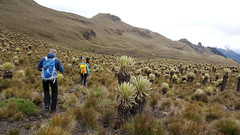 Hiking the Paramo