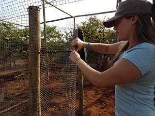 Volunteer building  rewilding cage