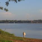 Vache à Kampong Cham
