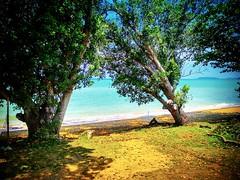 Kuala Linggi, Malacca https://goo.gl/maps/rSQWpvVcuEs  #travel #holiday #Asian #Malaysia #Malacca #旅行 #度假 #亞洲 #马来西亚 #马六甲  #trip #traveling #beach #海滩 #pantai #วันหยุด #การเดินทาง #ホリデー #휴일 #여행 #праздник #путешествие #ビーチ #바닷가 #ชายหาด #пляж #travelmalaysia