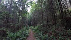 Sunshine Coast Trail