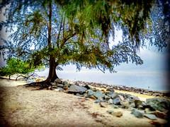 Kampung Sungai Sembilang, 45600 Jeram, Selangor https://goo.gl/maps/4tQmrXmQKoC2  #travel #holiday #Asian #Malaysia #旅行 #度假 #亞洲 #馬來西亞 #trip #traveling #beach #海滩 #pantai #วันหยุด #การเดินทาง #ホリデー #휴일 #여행 #праздник #путешествие #ビーチ #바닷가 #ชายหาด #пляж #Se