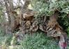 Barranc de Ràgil-Riu Verd-Torroselles – Tibi-25