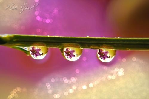 Drops/ Cseppek