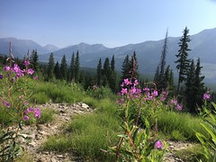 Great Divide Trail kurz vor Elkford