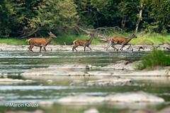 Water games (Red Deer)