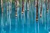 Photo:青い池 II By