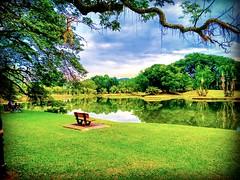 Taman Tasik Taiping, 34000 Taiping, Perak https://goo.gl/maps/wRVVMUNuACP2 #reizen #vakantie #voyage #viaggio #viaje #resa #Semester #Fiesta #Vacanza #Vacances #Reise #Urlaub #sjö #lago #Lac #see #meer #Asia #Malaysia #Taiping #太平湖公园 #travel #holiday #tri