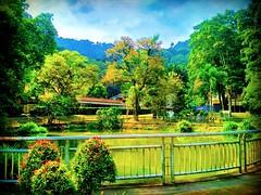 Forest Research Institute Malaysia (FRIM), 68100 Kuala Lumpur, Federal Territory of Kuala Lumpur https://goo.gl/maps/NnCfxYHpRX92 #大自然 #nature #自然 #طبيعة #자연 #Alam #природа #ธรรมชาติ #kualalumpur #travel #holiday #traveling #trip #旅行 #度假 #亞洲 #馬來西亞 #วันหยุ