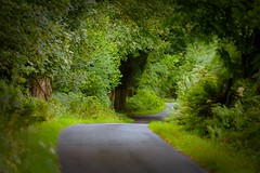 A country road on the Ardnamurchan peninsula