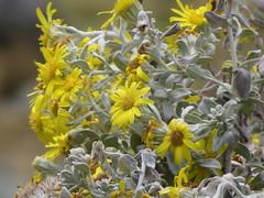 Blumen auf dem Weg zum Punta Pumacocha