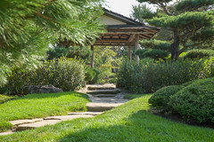 in a Japanese garden 3