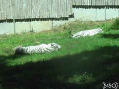 IMG_2644_Burgers_Zoo