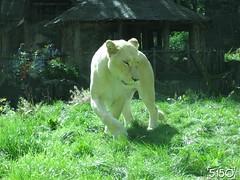 IMG_2699_Burgers_Zoo