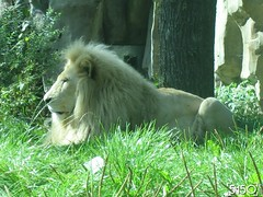 IMG_2697_Burgers_Zoo