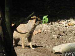 IMG_2703_Burgers_Zoo