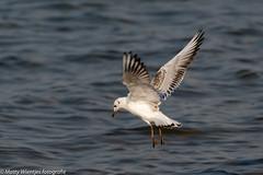 Matty Wientjes thema Vogels Q3-3