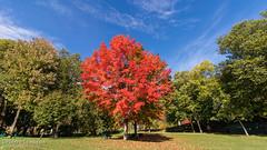 Premières couleurs d'automne / Early fall colors