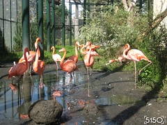 IMG_2484_Burgers_Zoo
