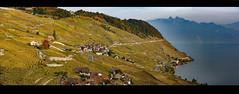 Swiss Autumn's time in Lavaux .The village of Épesses ; Canton of Vaud. Switzerland.Izakigur No. 335 336 337  17/10/2018 17:18:32