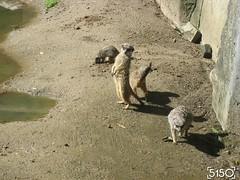 IMG_2582_Burgers_Zoo