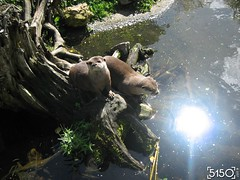 IMG_2611_Burgers_Zoo