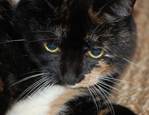 cats_meep