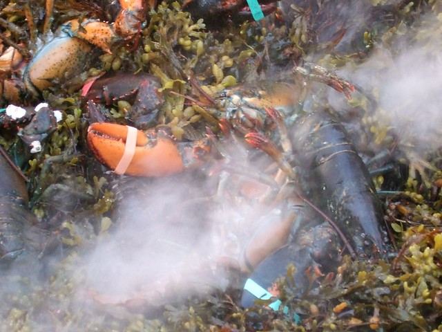 Lobsters in Seaweed