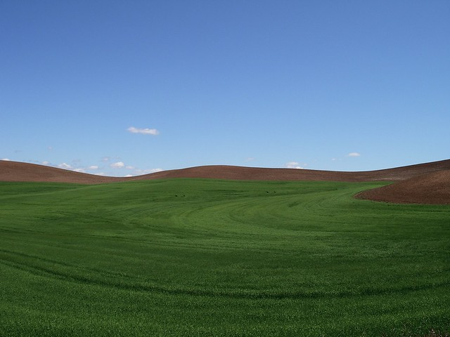 2006.06.12 - Palouse skyline