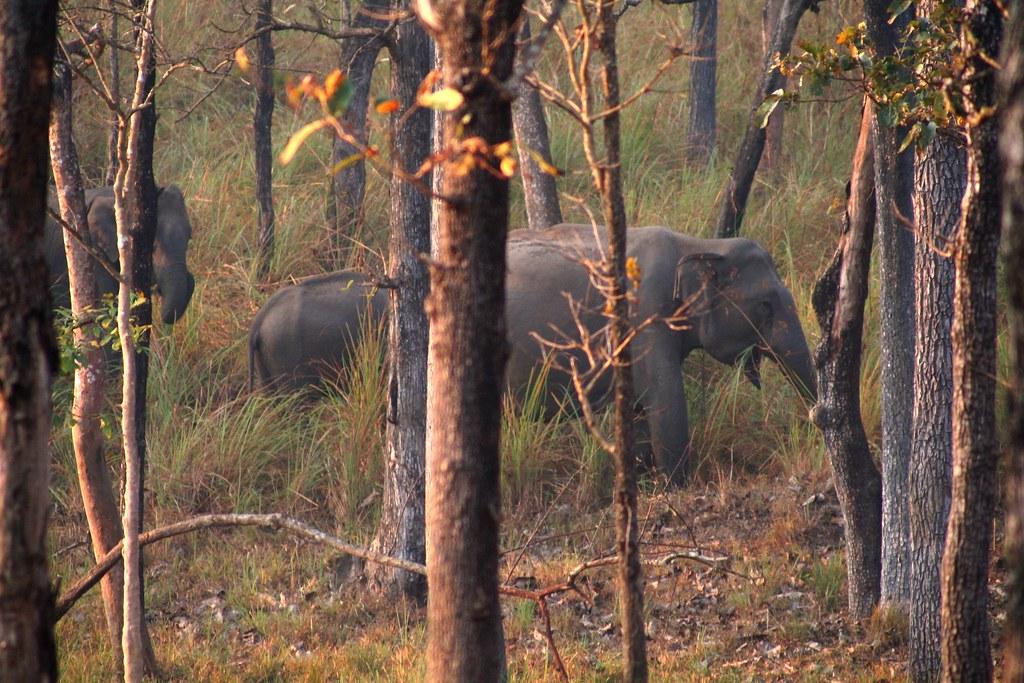 Wayanand wild life centuary
