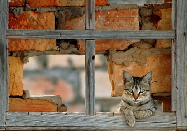 el gatito en la ventana