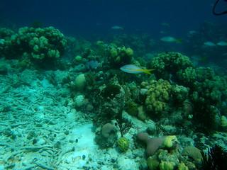 Arrecife de coral en Bahía de Cochinos