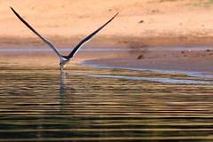 Pantanal - Faz. Barra Mansa