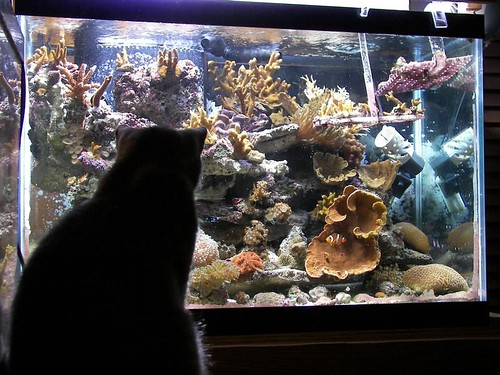 How TO Keep Your Cat Away from Your Aquarium