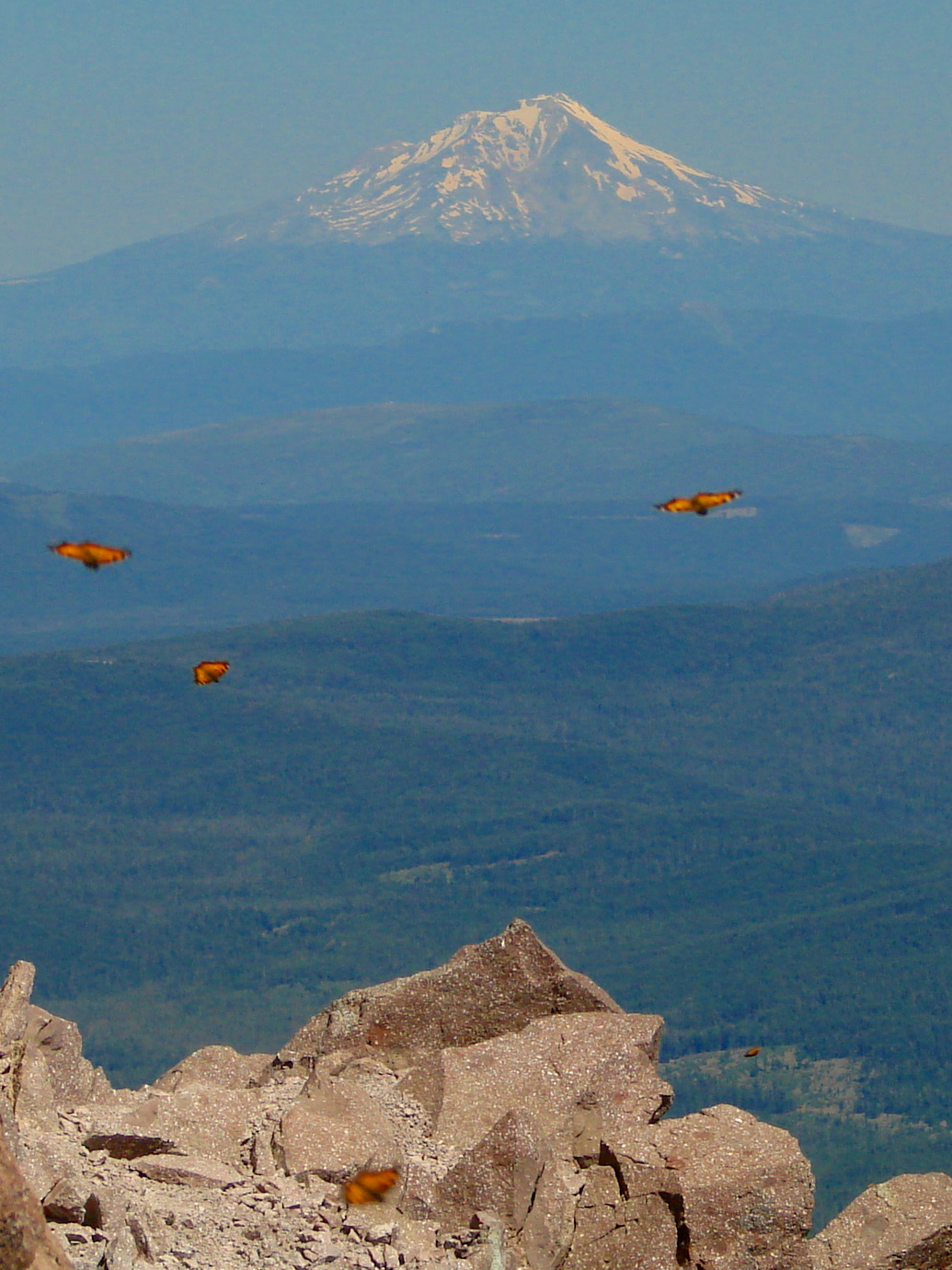 Mount shasta with butterflies