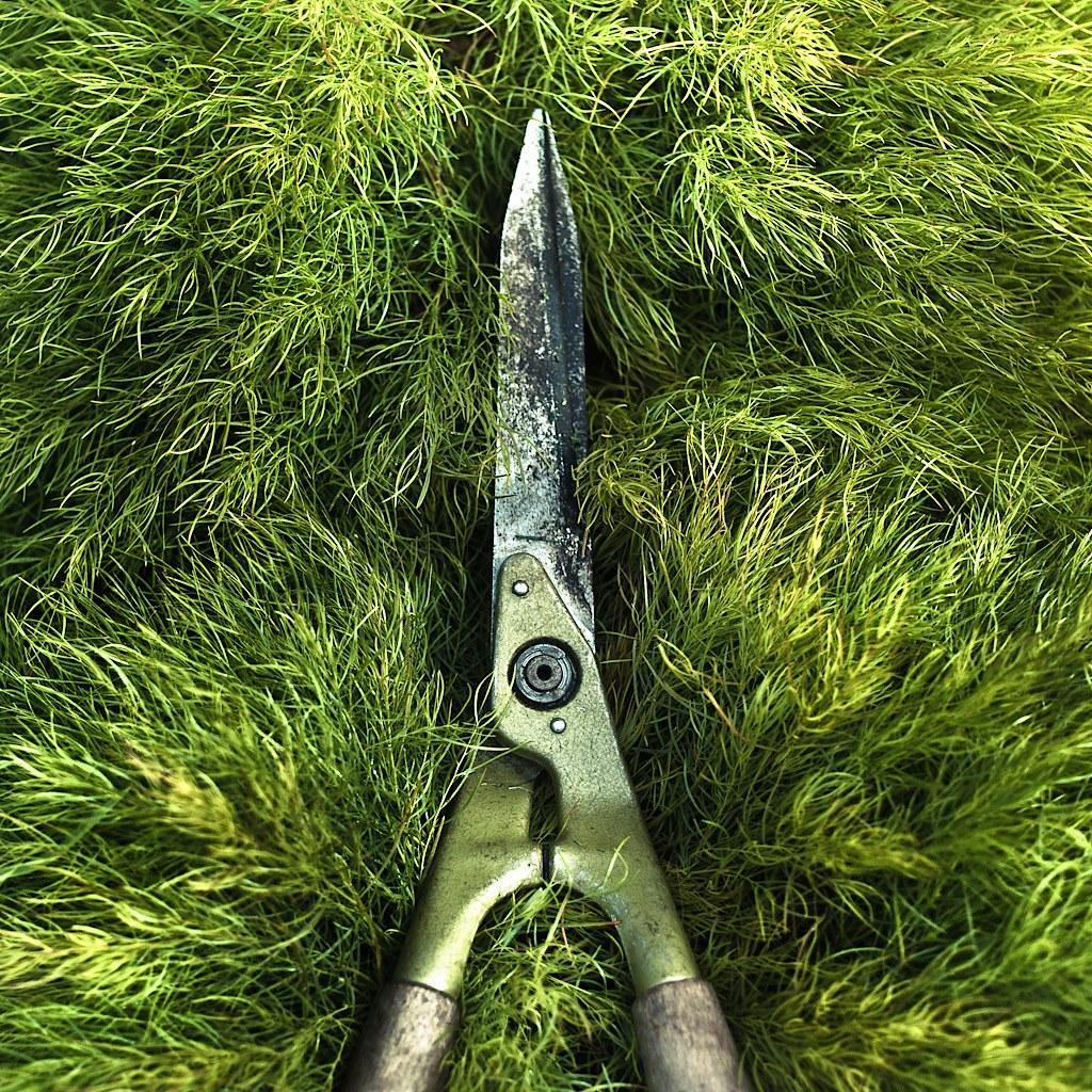Garden Grass Texture by Cuba Gallery