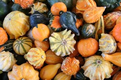 Pumpkin Patch Fall